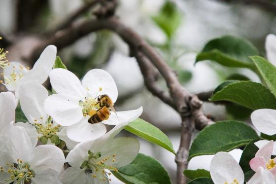 Bee052514web-1